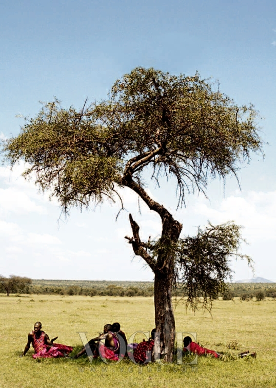 TREE OF LIFE 키이라의 사파리 여행에 동행한 마사이족들이 아카시아 나무 그늘 아래서 쉬고 있다.