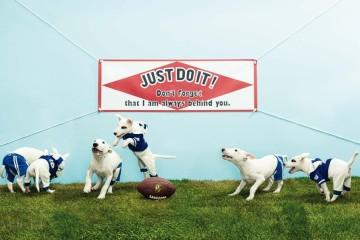 Bull Terrier American Football천방지축 불테리어종인 알토(4개월)와 티모(3개월)의 미식축구 경기! 벌써 1시간째 공을 두고 격렬한 몸싸움을 벌이고 있다. 알토가 입은 파랑 반바지는 퍼피 엔젤(Puppy Angel), 줄무늬 후드 점프수트는 원 오브 어스(One Of Us).