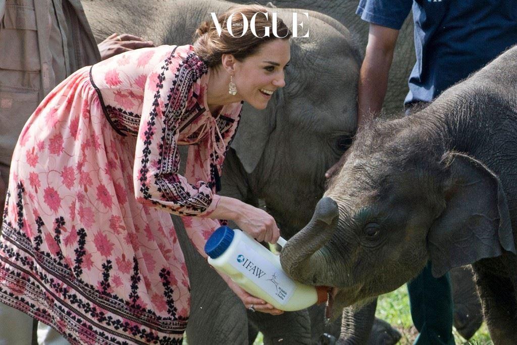 카지랑가 국립공원에 있는 아기 코끼리와 코뿔소에게 우유도 먹이고,