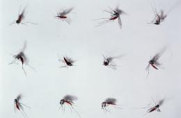 전염병이 발발한 지역에서 한 의사가 무시무시한 질병의 발견과 치료를 위해 최선을 다하고 있다. 지카 바이러스, 과연 인류의 재앙인가? 이집트 숲 모기, 박멸 가능한 모기일까?