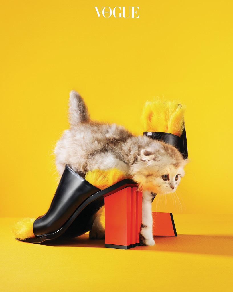 올겨울 심심한 룩을 위트 있게 만들어줄 컬러 포인트. 구조적인 굽의 양털 뮬은 마르케스 알메이다(Marques'Almeida at Boon The Shop), 뮬 위로 미끄러지는 고양이는 먼치킨.
