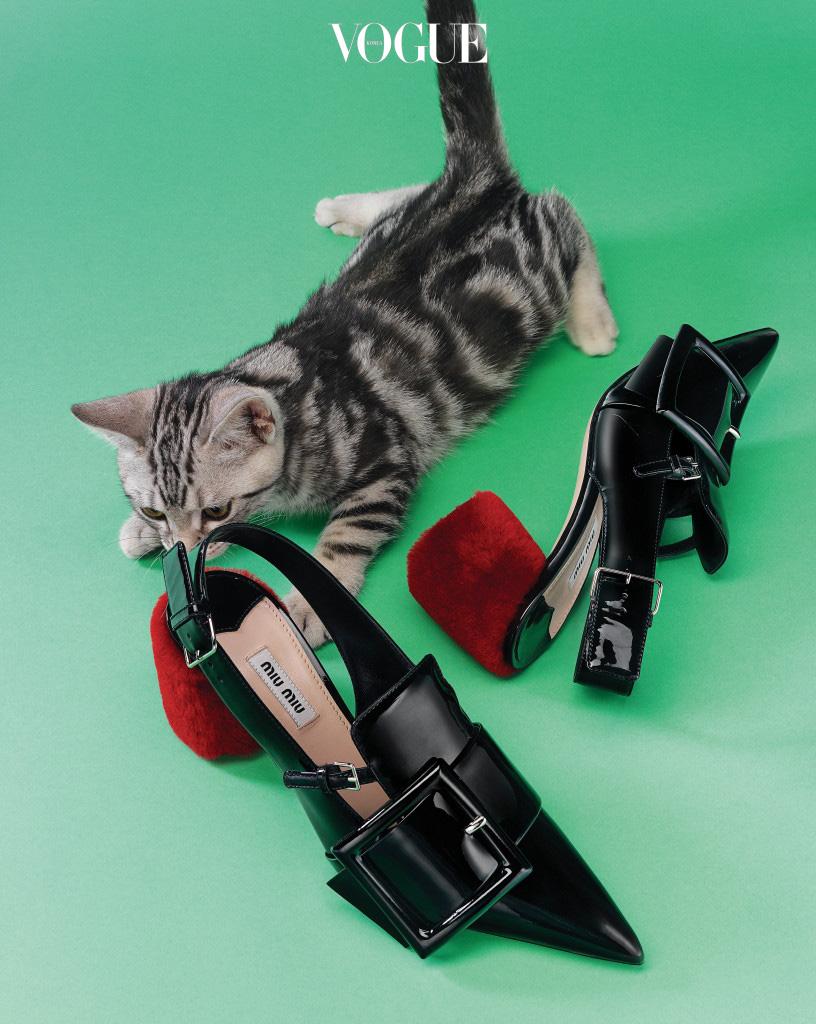 모피가 들어간 클래식한 슈즈는 모피 입문자도 쉽게 도전할 수 있다. 빨간 양털 굽의 슬링백 미들 힐은 미우미우(Miu Miu), 강렬한 무늬의 고양이는 아메리칸 쇼트헤어.