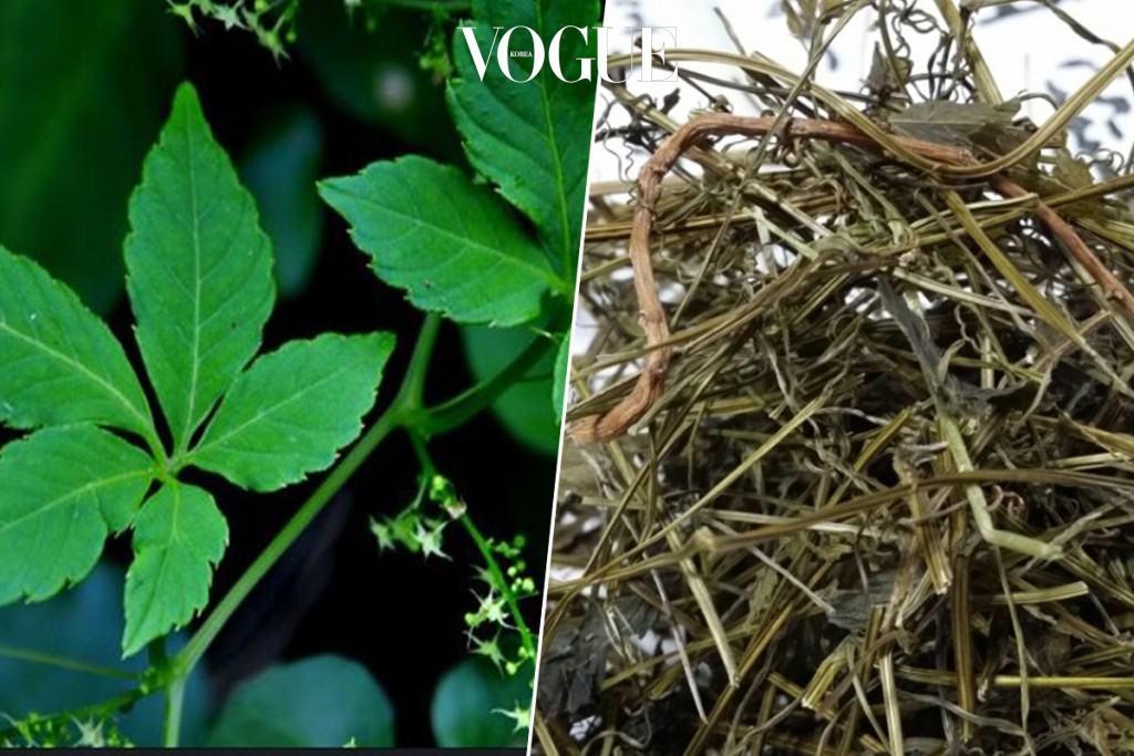 다섯 번째, 돌외잎으로 차 우려마시기 돌외잎에 들어있는 '액티포닌'이라는 성분이 AMPK효소를 활성화시켜 체내 지방분해를 촉진한다고 합니다.  의사들이 권하는 건강한 다이어트 식재료로 꼽히기도 하죠. 말린 돌외잎을 우려 식수로 자주 마셔보세요. 구수한 향 덕분에 상쾌함까지 느낄 수 있답니다.