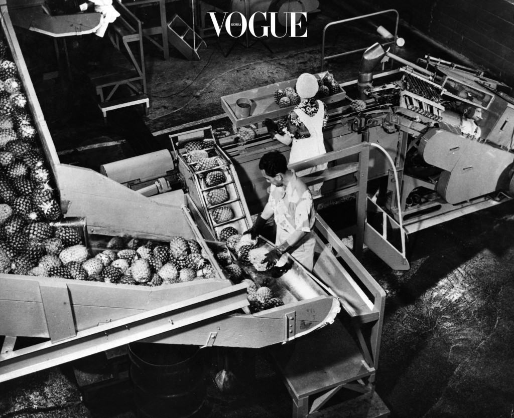 circa 1950:  Workers operating machinery for processing pineapples. The machine removes the shell and core and cuts off ends leaving the fruit in cylindrical form.  (Photo by Three Lions/Getty Images)