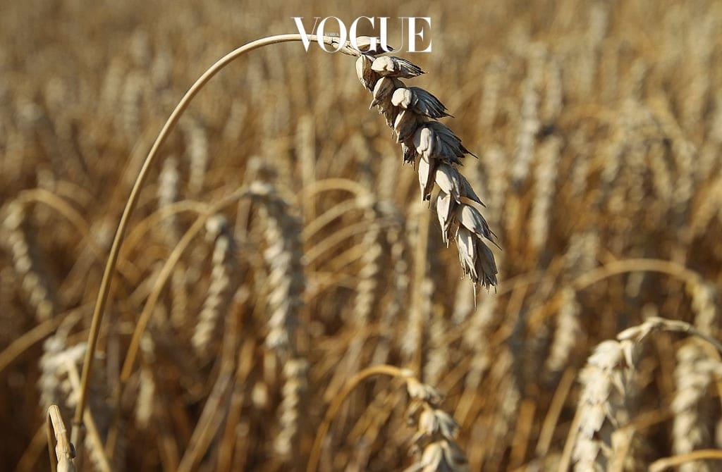 9 통곡물류 통곡물은 곡물의 영양소를 최대한 보존시켜 도정한 곡물로, 식이섬유와 셀레늄, 폴리페놀 성분이 풍부한 통곡물류를 섭취하면 집중력이 향상되고 정신이 맑아진답니다. 혈류량을 증가시키는 효과도 있어 전반적으로 뇌의 기능을 향상시켜주는 역할을 합니다.