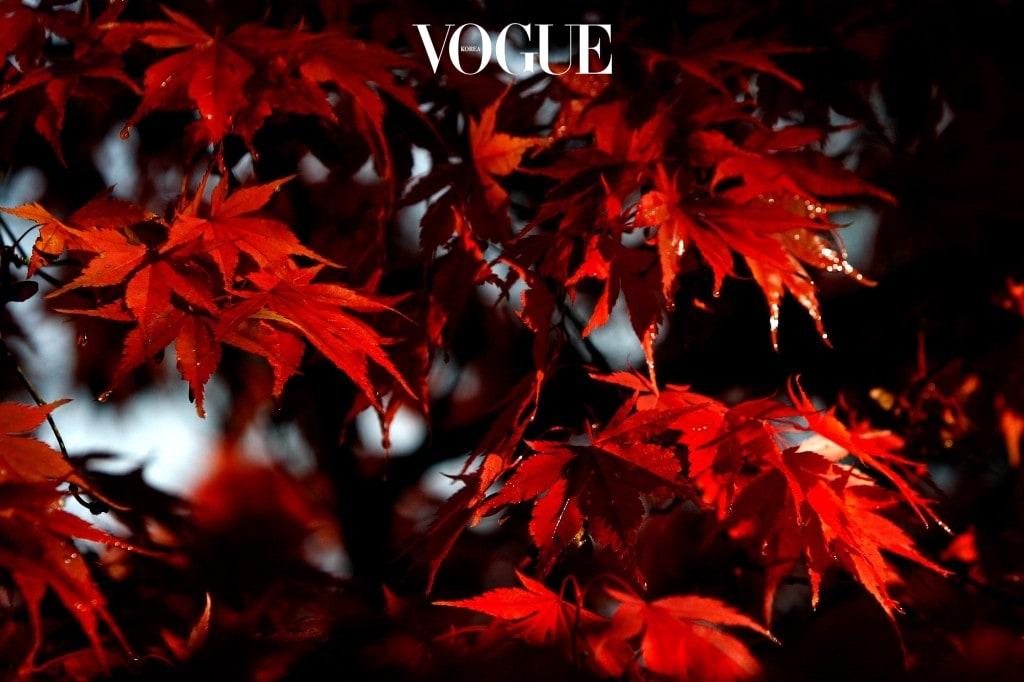 붉게 물든 단풍잎처럼 여인들의 마음에 퍼져가는 불꽃 같은 지름신, 그것을 해결하기 위한 유일한 색이... 레드?!