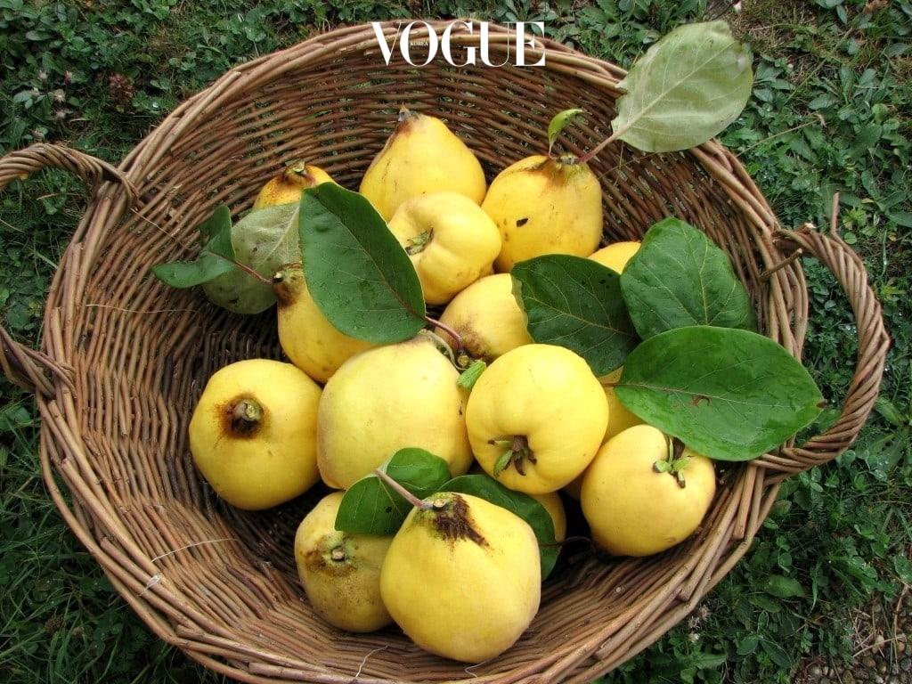 모과 비타민 A가 풍부하게 함유되어 있어 에스트로겐 합성 능력을 향상시켜줌. 비타민 C와 구연산, 탄닌 성분이 풍부하게 함유되어 면역력을 높여주고 피부를 맑게 해주며 유기산 성분이 소화기능을 개선해줌.