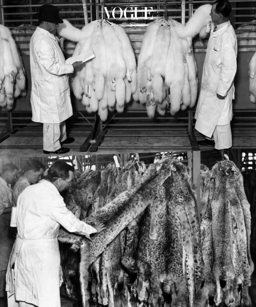 이렇듯 사회가 변화하며 동물보호에 대한 인식이 바뀌게 되며, 모피 아이템을 인간들의 무분별한 욕심으로 인한 동물 학대라는 인식이 자리를 잡게 됩니다.