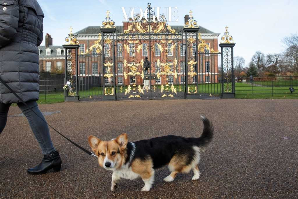 LONDON, ENGLAND - NOVEMBER 27: A woman walks her dog past Kensington Palace in Kensington Gardens on November 27, 2017 in London, England. Prince Harry and Meghan Markle's engagement was announced today after they became an official couple in November 2016 and are set to marry in Spring 2018. (Photo by Jack Taylor/Getty Images)