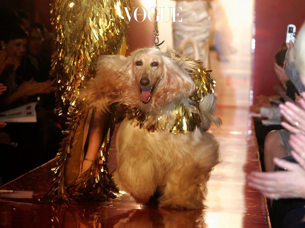 인간과 가장 가까운 동물, 올해의 주인공인 강아지들을 위해(실은 우리가 행복하기 위해) 마련한 '댕댕이' 특집!