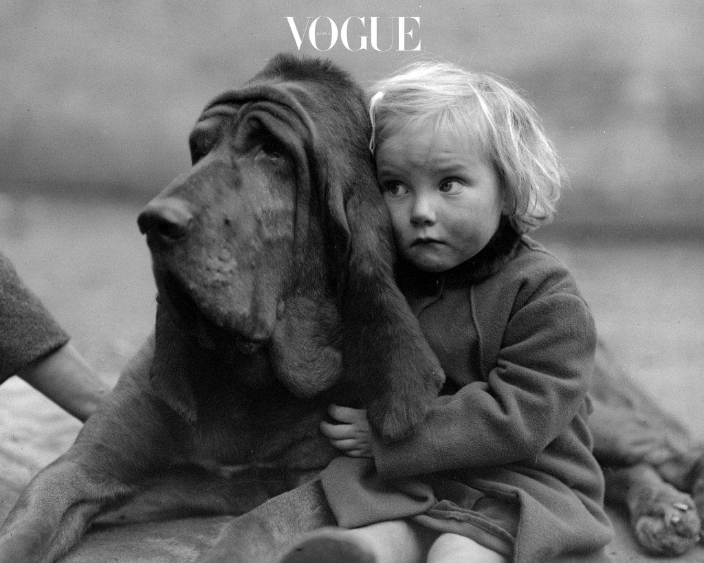 이 흐름을 잘 살펴 보면 최근 큰 사랑을 받게 된 견종부터 강아지들의 복지와 행복을 위해 다양한 활동을 하는 스타들의 모습까지 발견할 수 있죠.