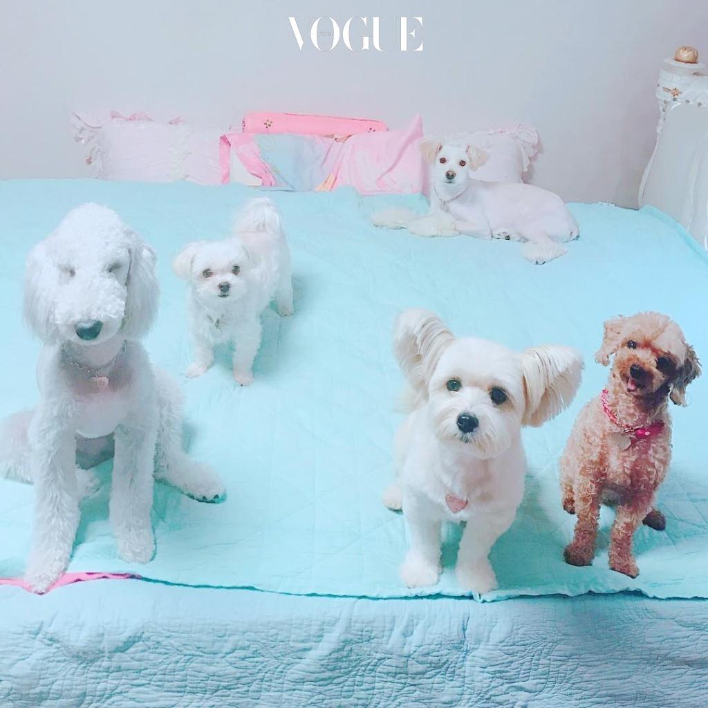 #강아지들의 보호자 홍수아 @sooah.hong
