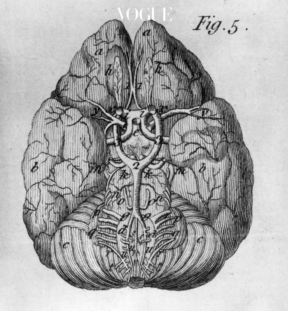 배고픔을 느끼게 하는 건 위와 장이 아닌 '뇌'랍니다. 뇌의 포만 중추는 하루에도 수십 번씩 변하는 우리 감정의 영향을 즉각적으로 받습니다.