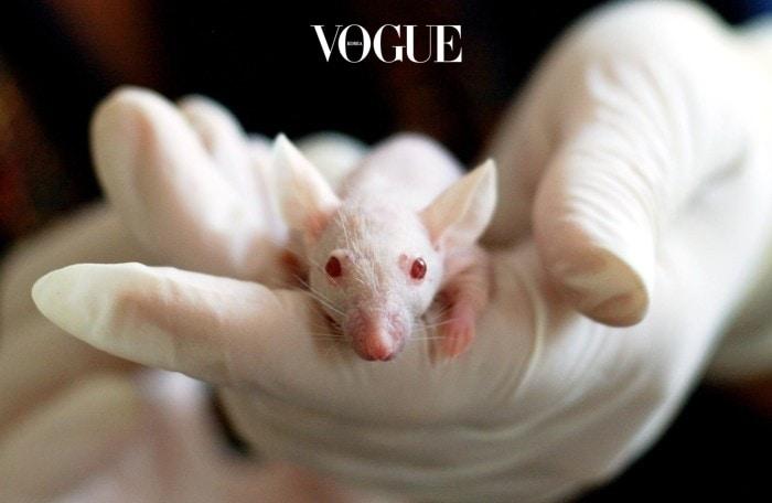 게다가 털이 나지 않는 실험용 쥐에 이 배양한 세포를 이식했더니 어떻게 되었는지 아시나요? 등에서 검정색 모발이 자라나기 시작했습니다. WOW!