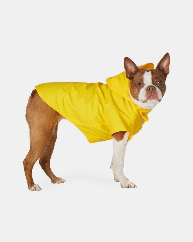 레인즈 반려견용 옐로우 레인 재킷