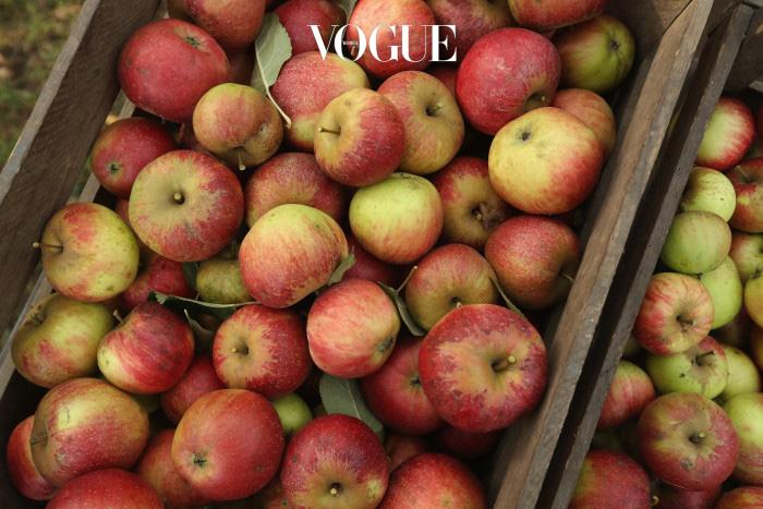 1. 사과  사과처럼 달콤한 과일에 함유되어 있는 과당(Fructose)은 대부분의 많은 사람들이 소화하기 힘든 성분 중에 하나입니다. 사과 하나 정도는 괜찮을 수도 있으나, 소화하기 힘든 양의 과당을 섭취하는 경우 소화기관은 가스를 생성하고, 부풀어오르게 되죠. 곧 부어있는 듯한 '똥배'가 만들어집니다.