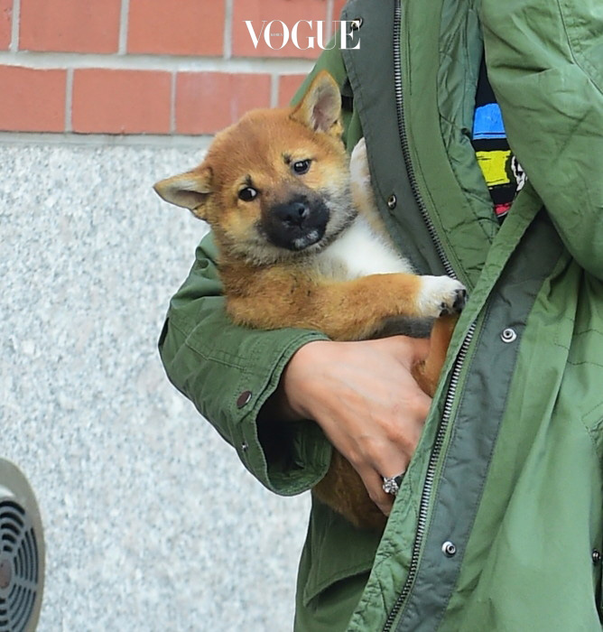 Hailey Baldwin was spotted out in NYC carrying the adorable puppy that she bought for her parents 25th anniversary. The cute ball of fur rested in her arms as she took the puppy to meet her pals Kendall Jenner and Jaden Smith. She then returned it to her Dad who was waiting in the car. Pictured: Hailey Baldwin Ref: SPL1055588  160615   Picture by: 247PAPS.TV / Splash News Splash News and Pictures Los Angeles:310-821-2666 New York:212-619-2666 London:870-934-2666 photodesk@splashnews.com