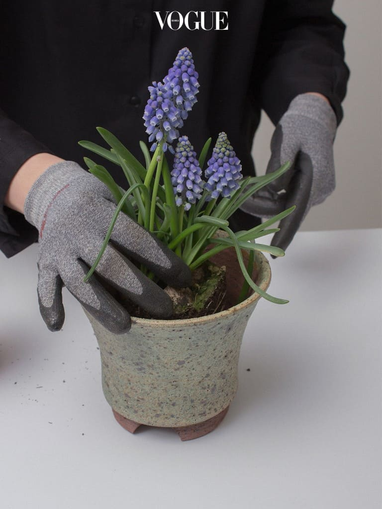5. 꺼낸 식물을 화분으로 옮겨 자리를 잡아준다.