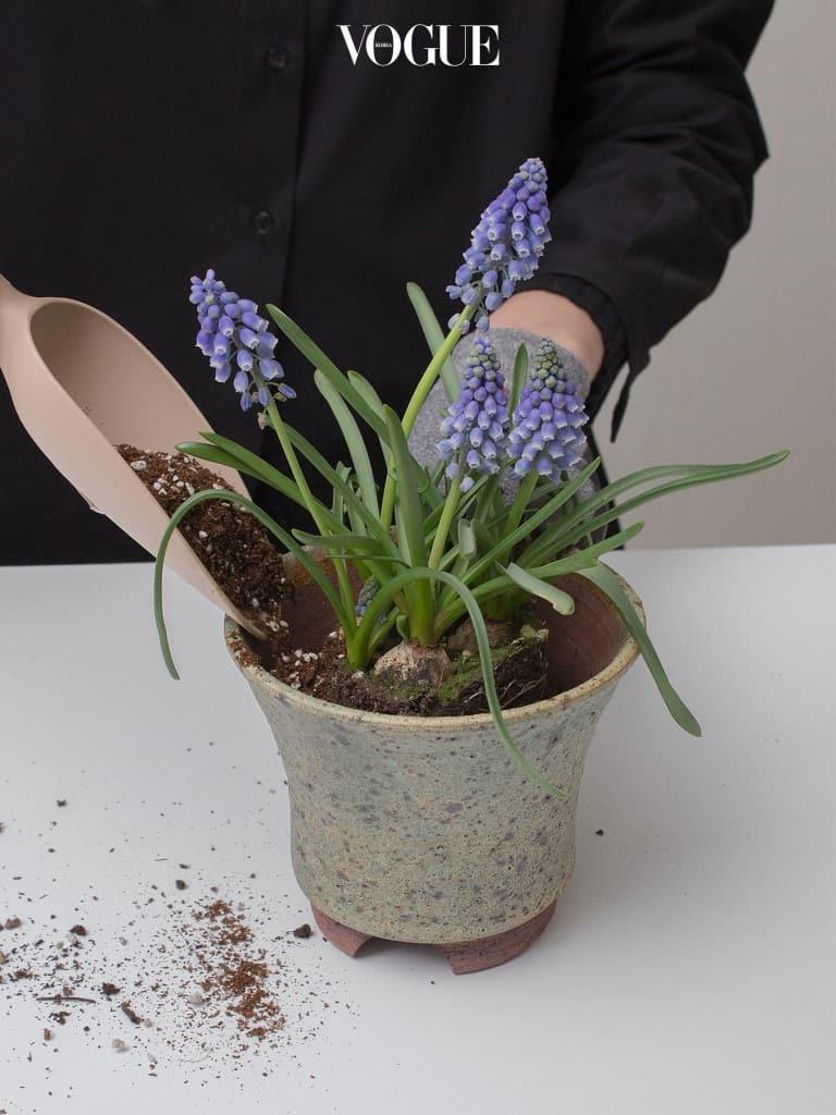 6. 식물을 넣고 빈 공간을 흙으로 채워준다. 구근 식물 분갈이에서 중요한 부분은 흙으로 알뿌리를 모두 덮어버리도록 심는 것은 피해준다. 구근이 1/3쯤 보이게끔 심어줄 것.