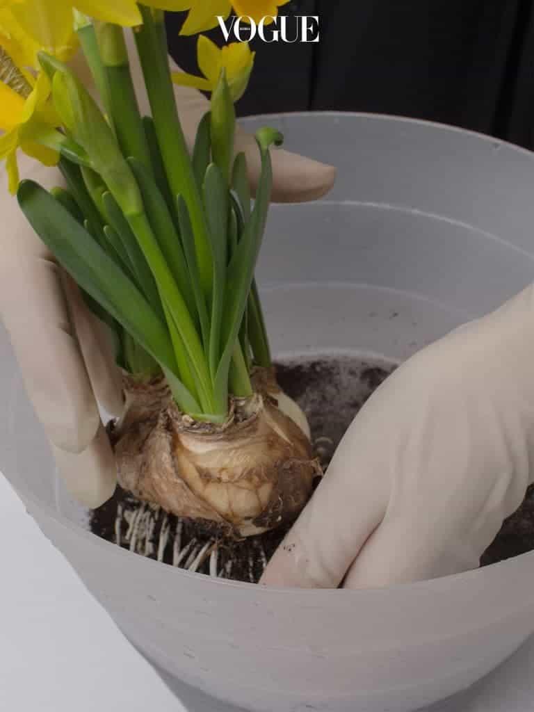 2. 흙을 털어내고 뿌리에 흙이 남지 않도록 구근과 뿌리를 깨끗하게 헹궈준다.