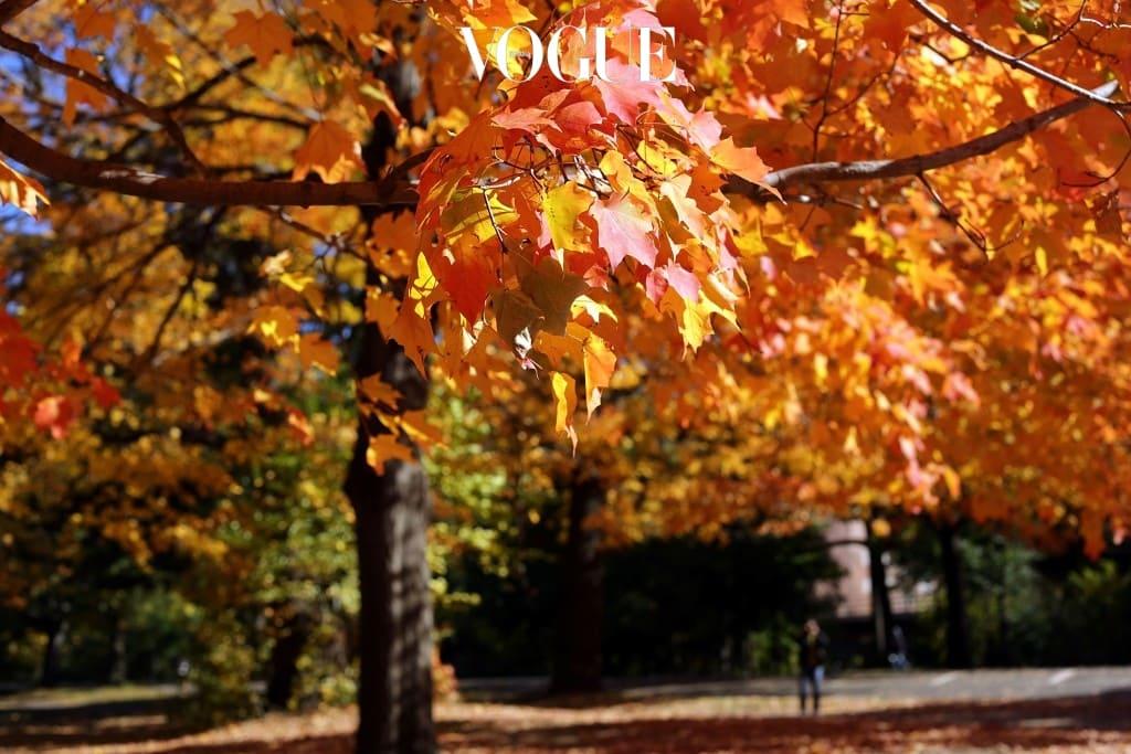 어느덧 가을에 접어든 시기,