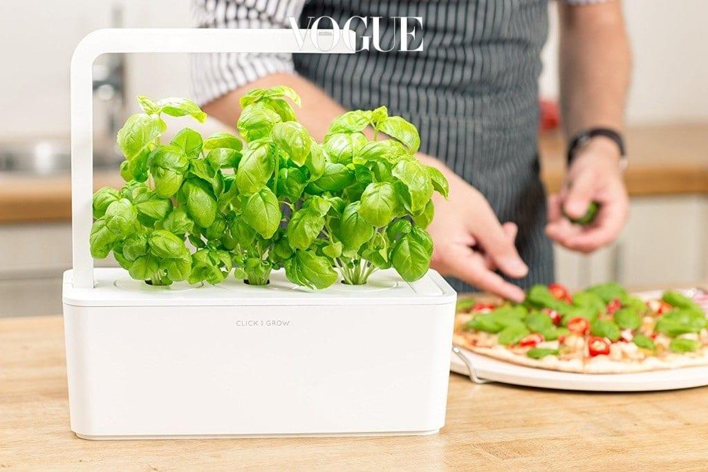 부엌 한 켠에 두고 필요할 때마다 한 잎씩 떼어 요리에 넣을 수도 있고, 스트레스가 많은 편이라면 초록 식물을 가까이 두어 기분 좋은 환경을 만들어 줄 수도 있답니다.