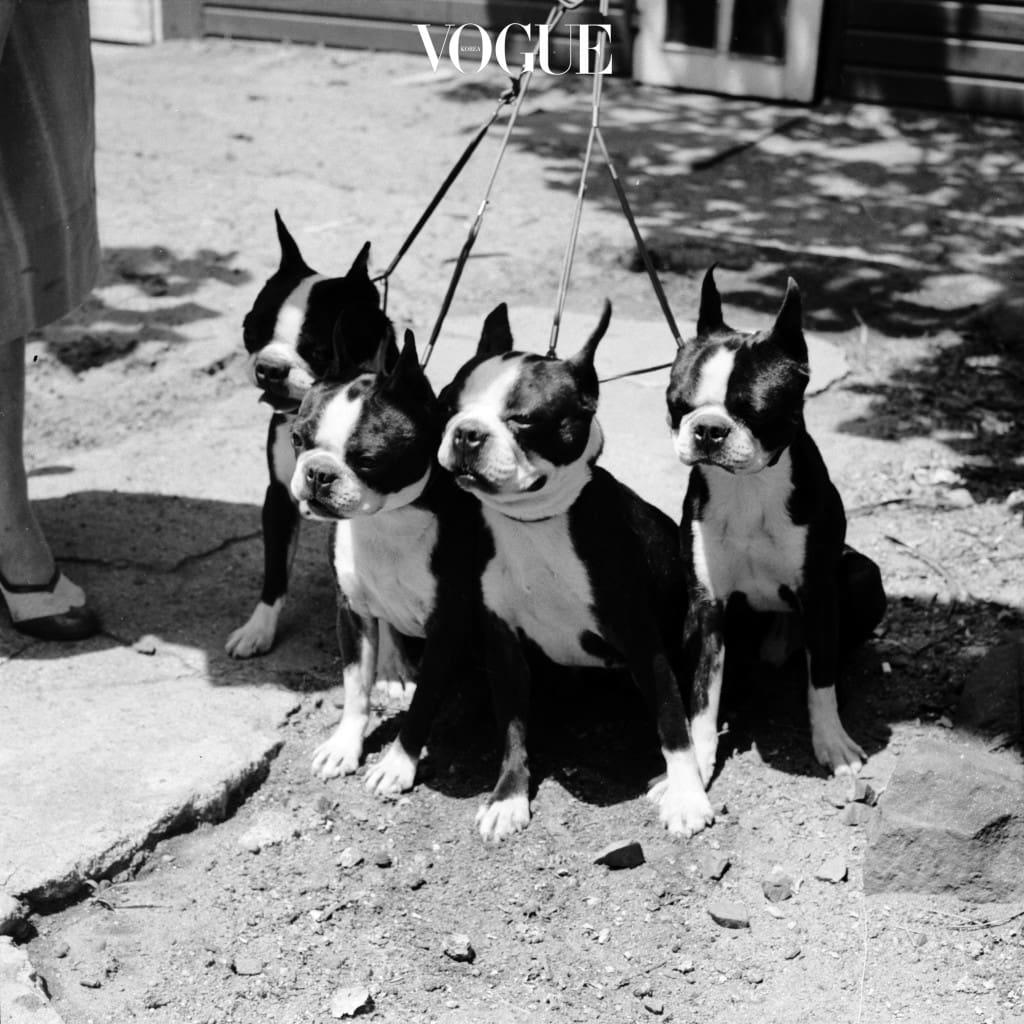 강아지들과 함께 하기 위한 첫 번째 과제는 '펫티켓(Petiquette)'!