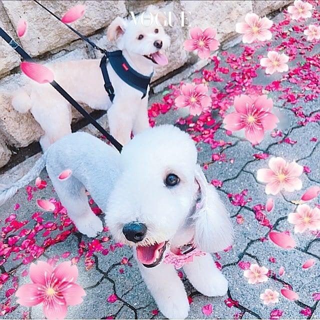 2018년에는 전세계 모든 댕댕이들이 꽃길만 걸을 수 있기를…! @sooah.hong