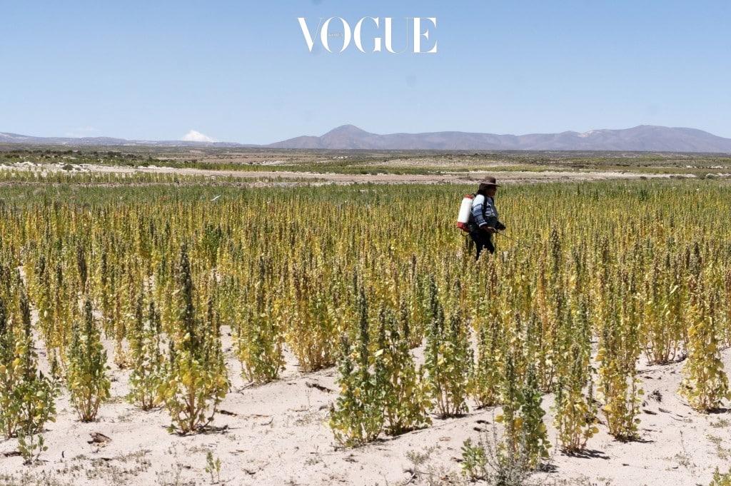 2017년 전세계 웰빙 트렌드의 최고점을 차지했던 '고대 곡물(Ancient Grain)',